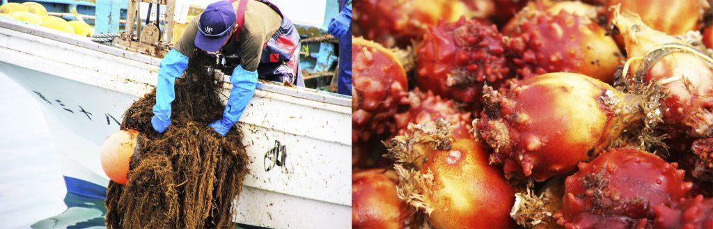 養殖漁業生産者