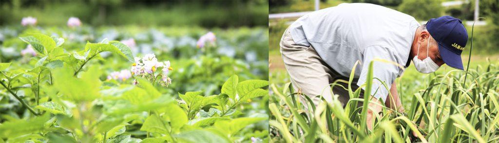 農業生産者
